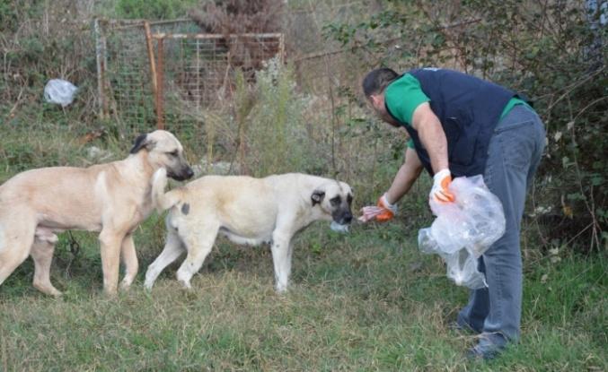 Kartepe'de Sokak hayvanları hem yemlendi hem aşılandı