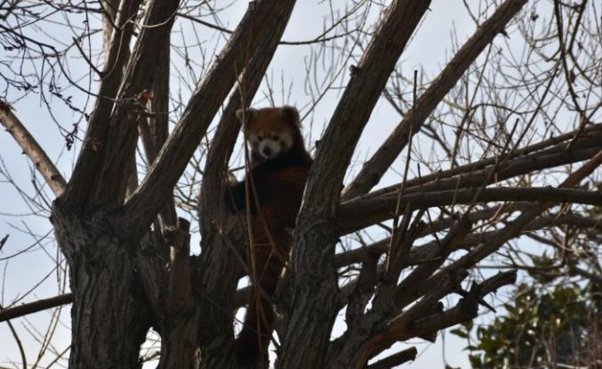 Darıca'daki Faruk Yalçın Hayvanat Bahçesi yarın yeniden ziyarete açılacak