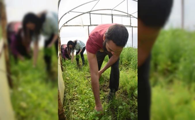 Genç girişimci organik tarıma kazandırdığı atıl arazide 20 kişiye istihdam sağladı