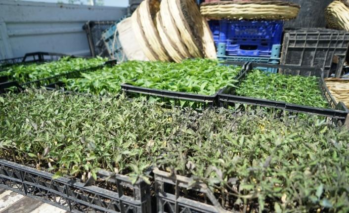 Balıkesir'de çiftçiye yüzde 50 hibe ile 400 bin fide dağıtıldı