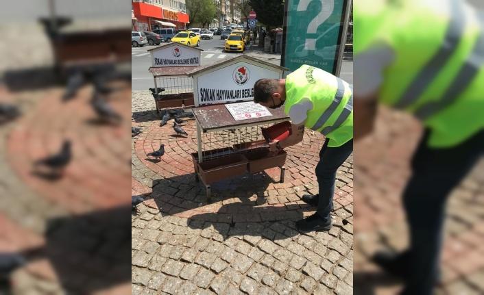 Kırklareli Belediyesinden sokak hayvanlarına mama desteği