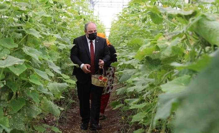 Bakan Varank, Gaziantep'te sebze hasadı gerçekleştirdi