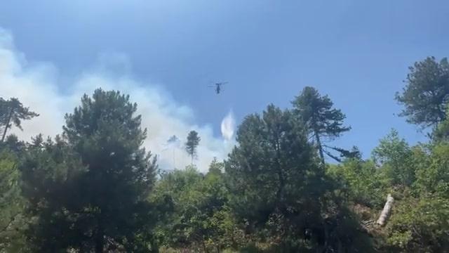 Balıkesir'de ormanlık alanda çıkan yangın kontrol altına alındı