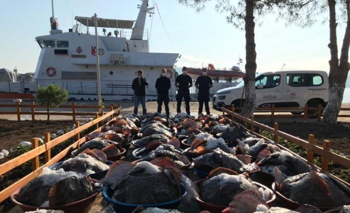 Kandıra'da yasak dönemde avlanan 3 ton kalkana el konuldu