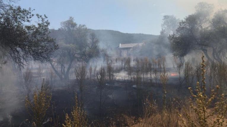 Otluk ve zeytinlik alanda çıkan yangın söndürüldü