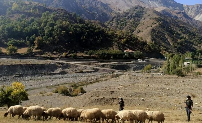 Jandarma kaybolan hayvanları drone ile buldu