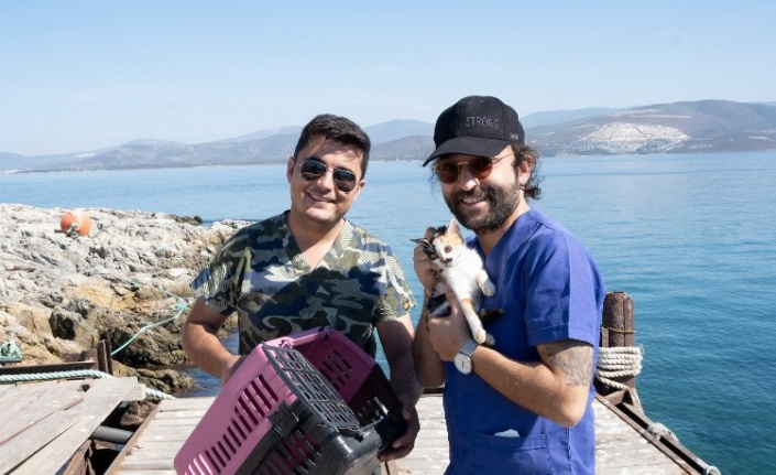 Adaya bırakılan kediler kurtarıldı