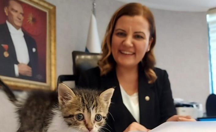 İzmit Belediyesi minik kediyi sahiplendi