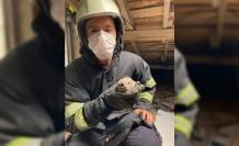 Çatı arasında mahsur kalan baykuş kurtarıldı