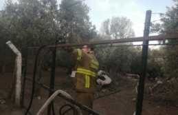 Yangında 14 küçükbaş hayvan telef oldu