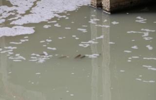 Malkara'da deredeki balık ölümleri araştırılıyor