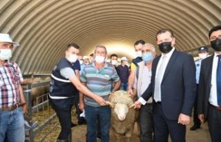 Balıkesir Büyükşehir Belediyesi üreticiye damızlık...