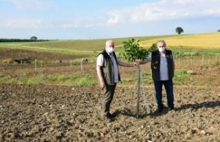 Edirne'deki ağaçlandırma alanları incelendi