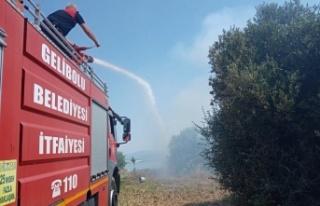 Gelibolu'da zeytinlikte çıkan yangın söndürüldü