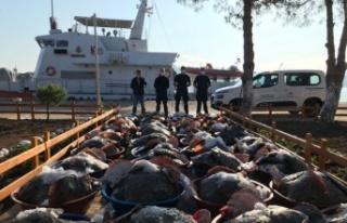 Kandıra'da yasak dönemde avlanan 3 ton kalkana el...