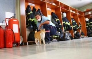 Otomobil motorundan kurtarılan kediler Tekirdağ...