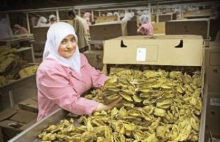 Şark tipi tütün üretimi dünya liderliğini koruyor