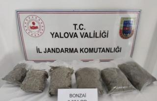 Yalova'da uyuşturucu operasyonlarında 3 şüpheli...