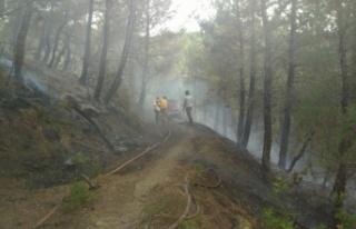 Balıkesir'de çıkan orman yangını kontrol altına...