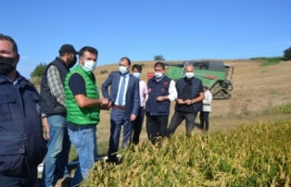 Biga'da çeltik hasadı yapıldı
