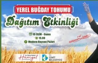 İzmit Belediyesi yerli buğday tohumu dağıtacak