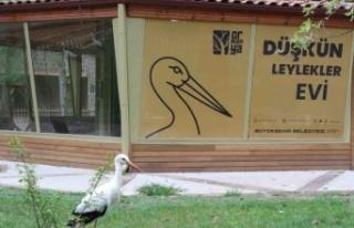 Kocaeli Ormanya'da Düşkün Leylekler Evi yapıldı