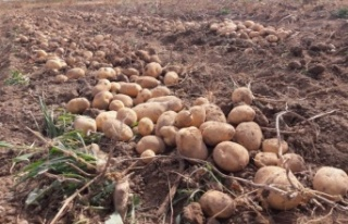 Üretilen tohumlar bütün yurtta yeşerecek