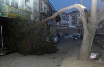 Dikkatsiz sürücü asırlık ağaca çarptı!