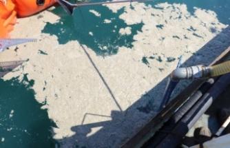 Yalova'da 9 günde 1478 metreküp müsilaj toplandı