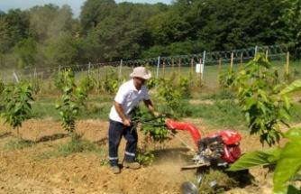 İzmit'te dut bahçelerinin bakımları yapılıyor
