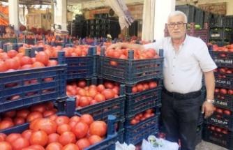Salçalık domatesler çıktı