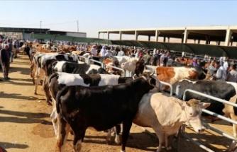 Tarım ve Orman Müdürü Bayazıt'tan satış ve kesim alanlarında kurallara uyulması çağrısı
