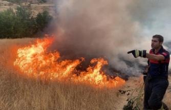 Adıyaman'da yangın ağaçları vurdu