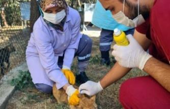 Bursa Osmangazi'de villa kediler parazitlere karşı ilaçlandı