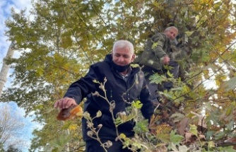 160 yıllık ağaçtan toplanan bal vatandaşlara ikram edildi