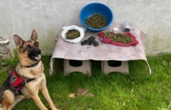 Karasu'da 1,5 kilo kubar esrar ve kurusıkı tabanca ele geçirildi