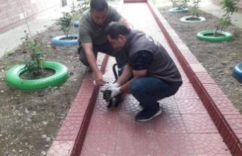 Gebze Belediyesi Veteriner İşleri Müdürlüğü Yaralı Kedileri Tedavi Etti