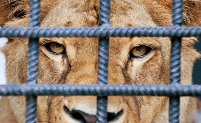 Hayvanat Bahçesi olağan seyrinde