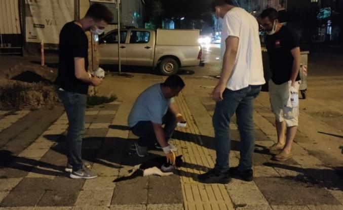 Gebze'de otomobilin çarptığı kediye hayvansever gençten şefkat eli