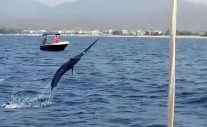 Oltasına 3 metrelik Kılıç balığı takıldı