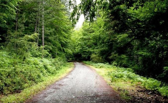 Yalova'da ormanlık alanlara girişler 1 Eylül'e kadar yasaklandı