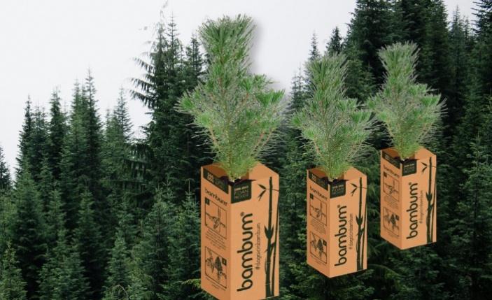 Bambum, yeşil bir Türkiye için 100 bin fidan dağıtacak